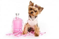 Косметические средства для ухода за шерстью и шампуни для собак